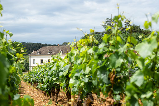 Château de Garnerot - Mercurey - View from the vineyards