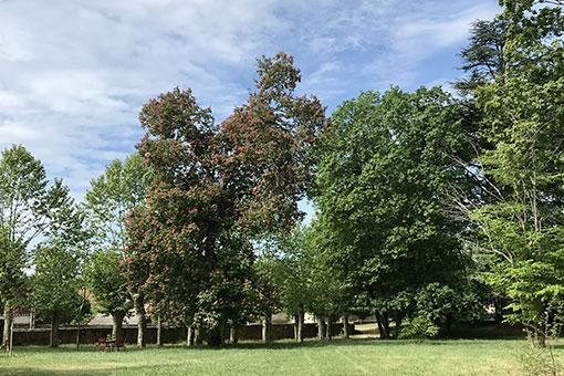 Château de Garnerot - Mercurey - Le parc au printemps