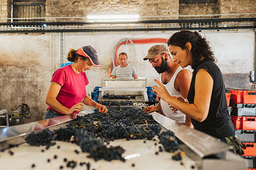 Château de Garnerot - To the winery - Harvest 2019