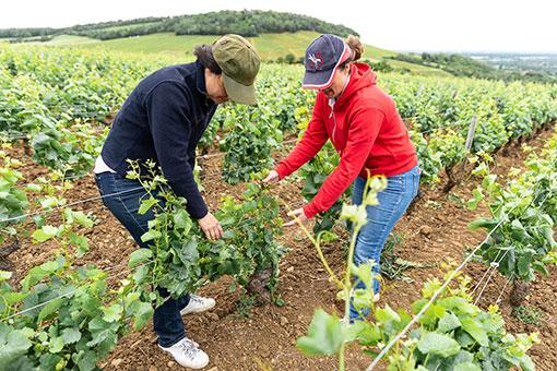 Château de Garnerot - Les vins se préparent de la vigne à la cave - Alexia Russo et Caroline Fyot dans les vignes
